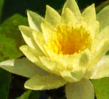 Soft Sunny Yellow - A Waterlily Impression Sticker