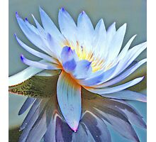 Spinning Chakra Lotus Photographic Print