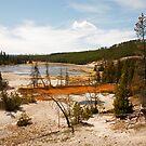 Yellowstone View by Olga Zvereva