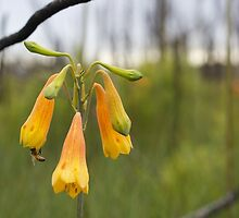Yellow Christmas Bell by GrowingWild