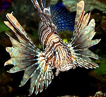 Lionfish Closeup by Carole-Anne