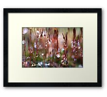 Rain Catcher Framed Print
