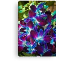 Beautiful coloured Orchids Canvas Print