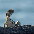 water dragon - australian lizard by GrowingWild