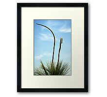 xanthorrthoea twin spikes Framed Print