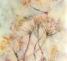 Cow Parsley by Manda Ward