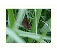 small brown ringlet Art Print