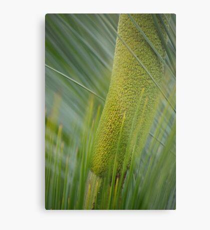 grass tree flower Metal Print