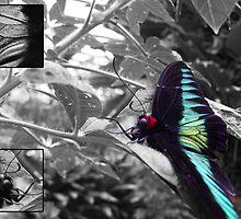 Butterfly by Joeltee