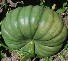 Pumpkin by Fred  Smith