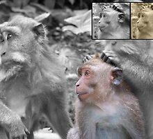 3 Monkeys by Joeltee