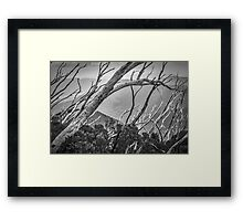 Directions of the Forest Framed Print