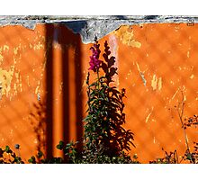 Urban Wild Flowers and Peeling Paint Photographic Print