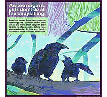 Babysitters' club (American crow) Photographic Print