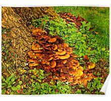 Creeping Fungi Poster