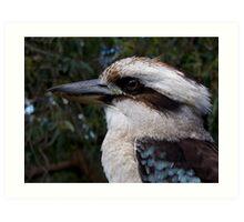 Australian Kookaburra Art Print
