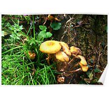 Fungi #2 Poster