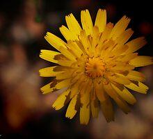 Echo Points Pollen Awaits by StarKatz