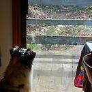 Doggie TV by Anne Smyth