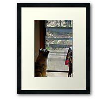 Doggie TV Framed Print