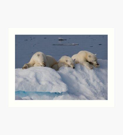 Resting Bears Art Print