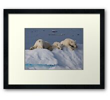 Resting Bears Framed Print