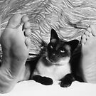 Pussy Foot (Close-up) 1992 by Cathie Brooker