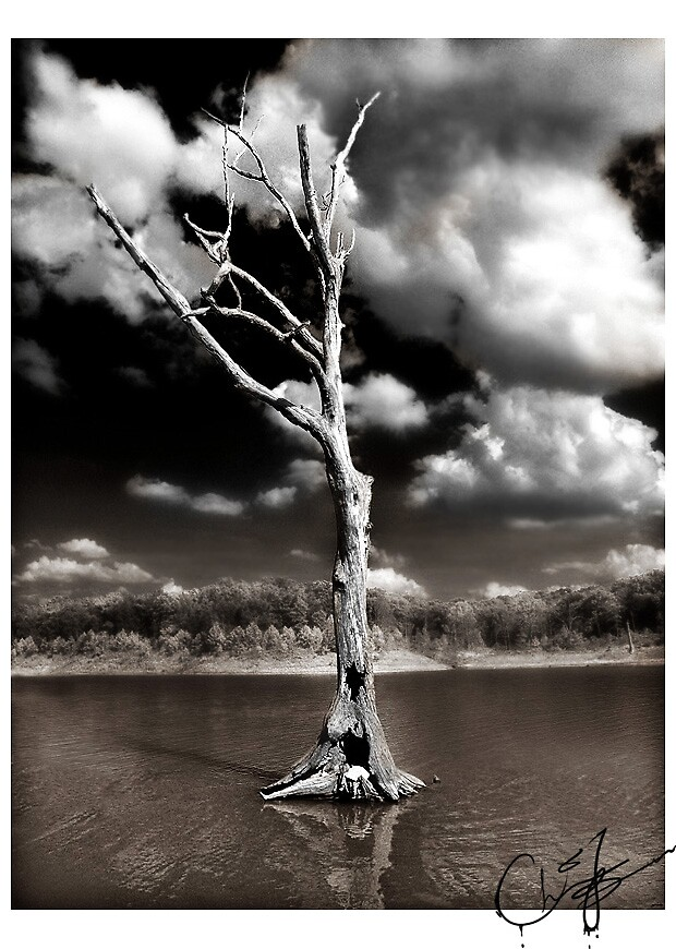 The Dead Tree by Christopher B.