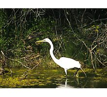 Canal Prey Photographic Print