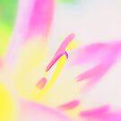Pink by Robin Webster