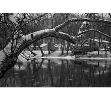 Snowy Sunday Photographic Print
