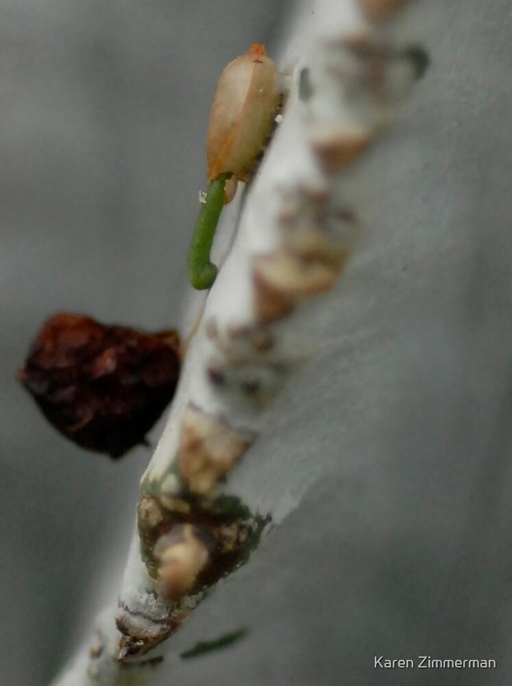 A Tiny Mistletoe is Born by Karen Zimmerman