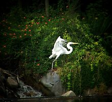 Nature of Birds by Darlene Wilson