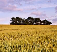 Wheat field at dusk by Patrick Morand
