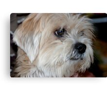 Stray pup. . .  Canvas Print