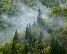 Mist on Valserine forest by Patrick Morand