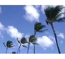 Palm trees in the wind. Photographic Print