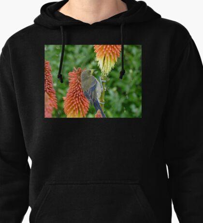 These Pokers Are Sweet - Female Bellbird - NZ Pullover Hoodie