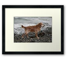 Wet From the Sea Framed Print