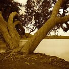 paperbark tree by the lake by GrowingWild