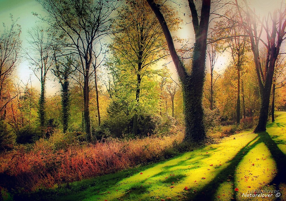 Autumn Woodland  by naturelover