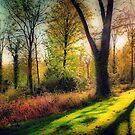Autumn Woodland  by naturelover