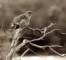 ruffled feathers by GrowingWild