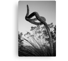 xanthorrhea twist Canvas Print