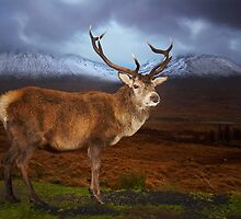 Solitary Stag by Coenraad Heijdemann