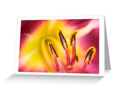 Day Lily macro #56 Greeting Card