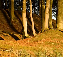 Trunks and shadows by Lars Clausen