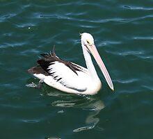 Hello Percy the Pelican by PetaStreet