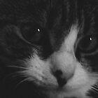 Feline Fatale by Jack Nicholson