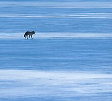 On Thin Ice by Jay Ryser
